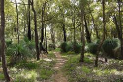 kyotmunga walk trail Perth