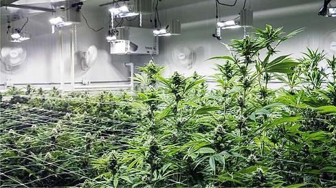 Cannabis Facility.png