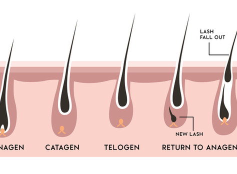 Here's What You Should Know About Your Eyelash Cycle