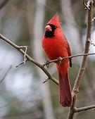 Kemtucky bird.jpg