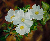 Georgia State Flower.jpg