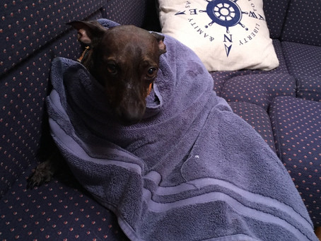 Boat Dog, a Quest, and an Involuntary Winter Bath