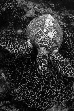 Discover Scuba Diving [VOUCHER]