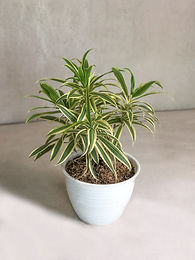 Affordable plants to kickstart your plant hobby [VOUCHER]