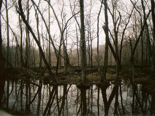 """""""Swamplands""""- Framed Print"""