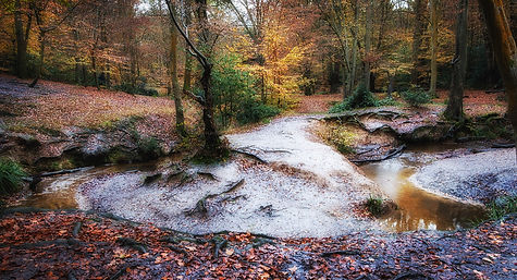 Epping Forest 5.jpg
