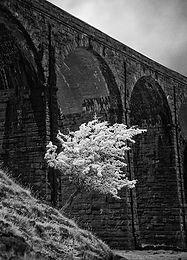 R Viaduct_Tom.jpg