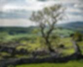 Yorkshire Dales_Jill.jpg