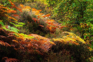 Epping Forest 1 CH.jpg