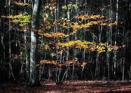 14. Autumn Abstract II.jpg