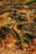 AL9I2102.jpg
