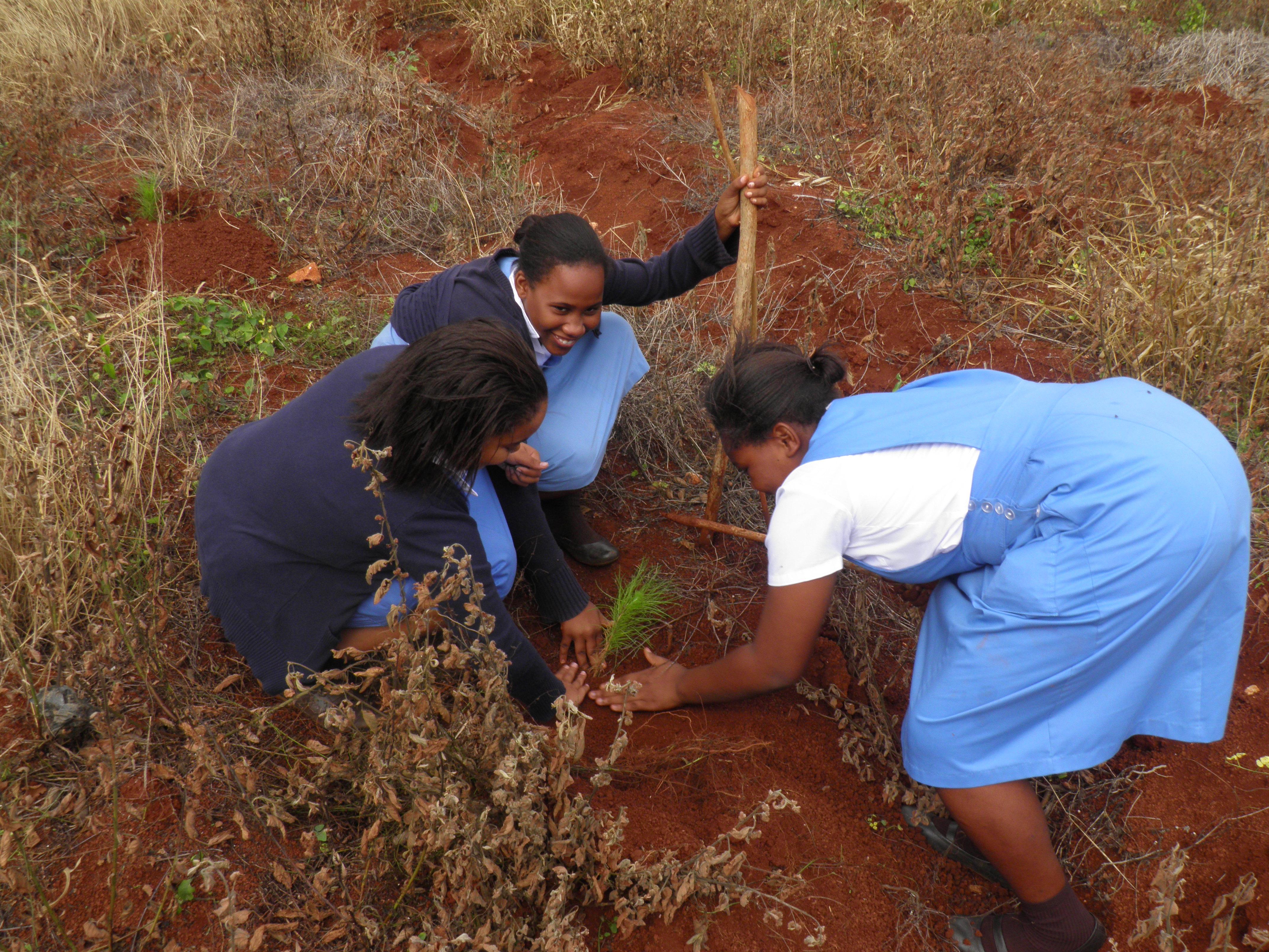 Tree Planting at Hampton School