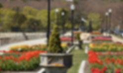 2020-5-13-tulips-at-blvd-012.jpg