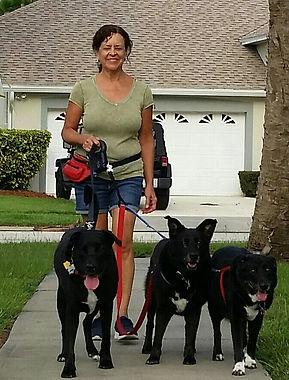 Dog walking 2018-07-23 19.34.18.jpg