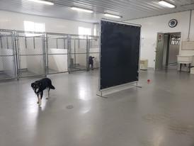 Indoor Dog Area