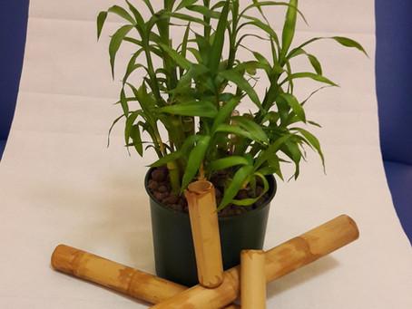 Bamboo Massage, dalla natura uno strumento straordinario.