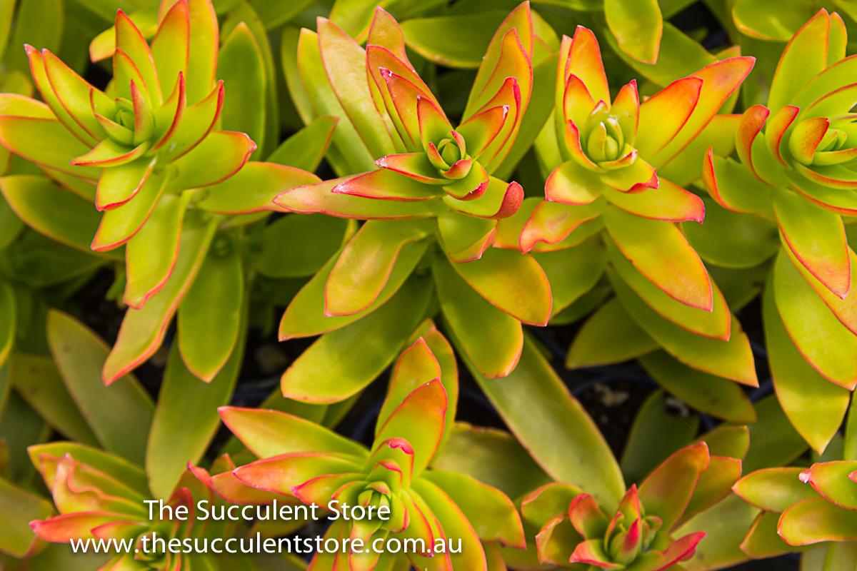 Succulent Store Jan2017-1124