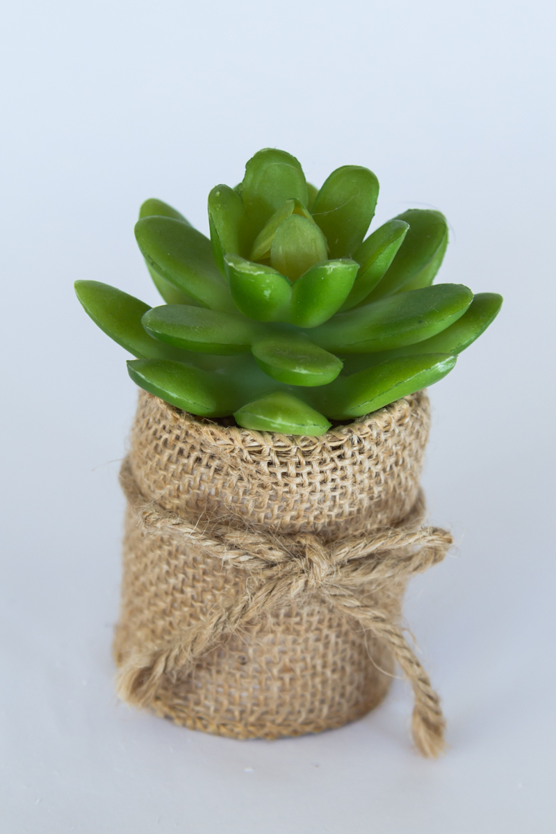 Succulents_Mixed-104