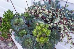 Succulents_Mixed-134