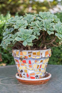 Succulents_Mixed-132