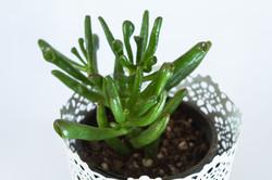 Succulents_Mixed-101