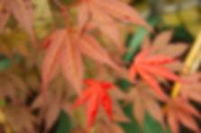 Granton Plants
