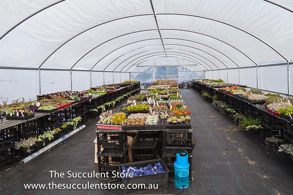 Succulent Store Jan2017-1099
