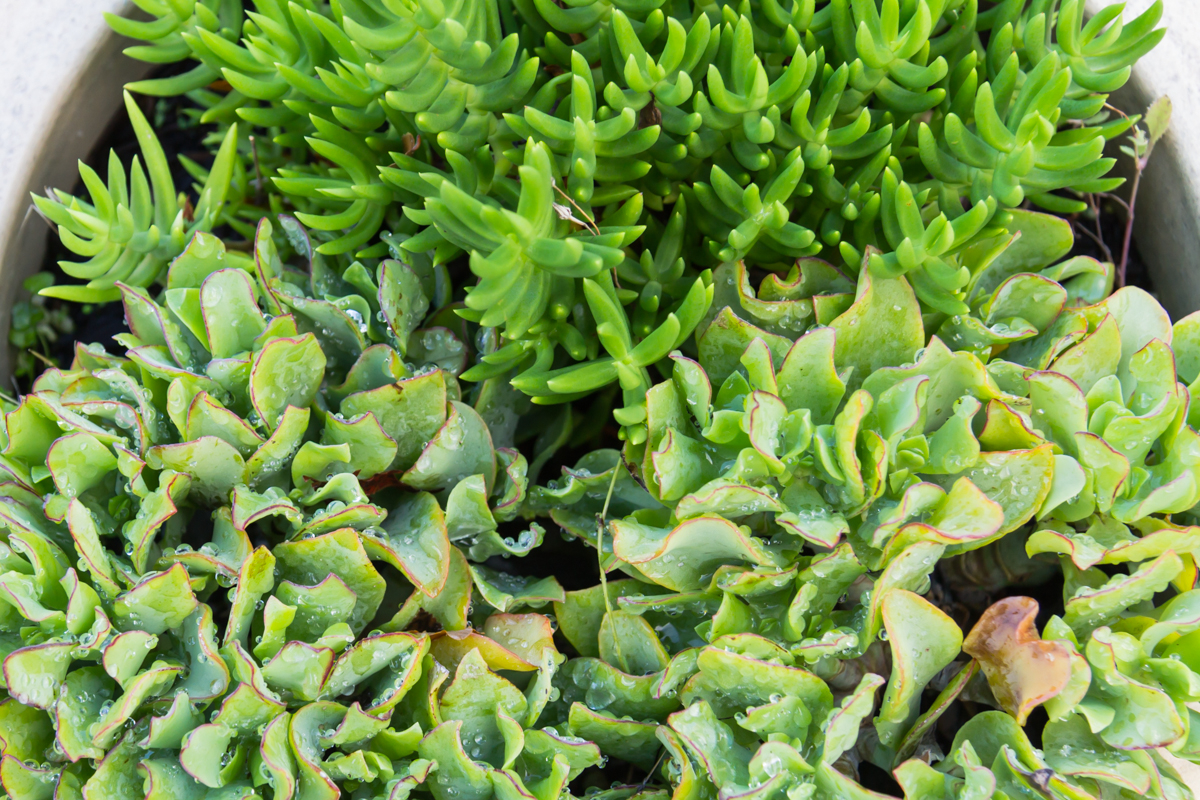 Succulents_Mixed-141