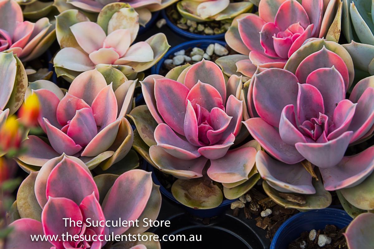Succulent Store Jan2017-1111