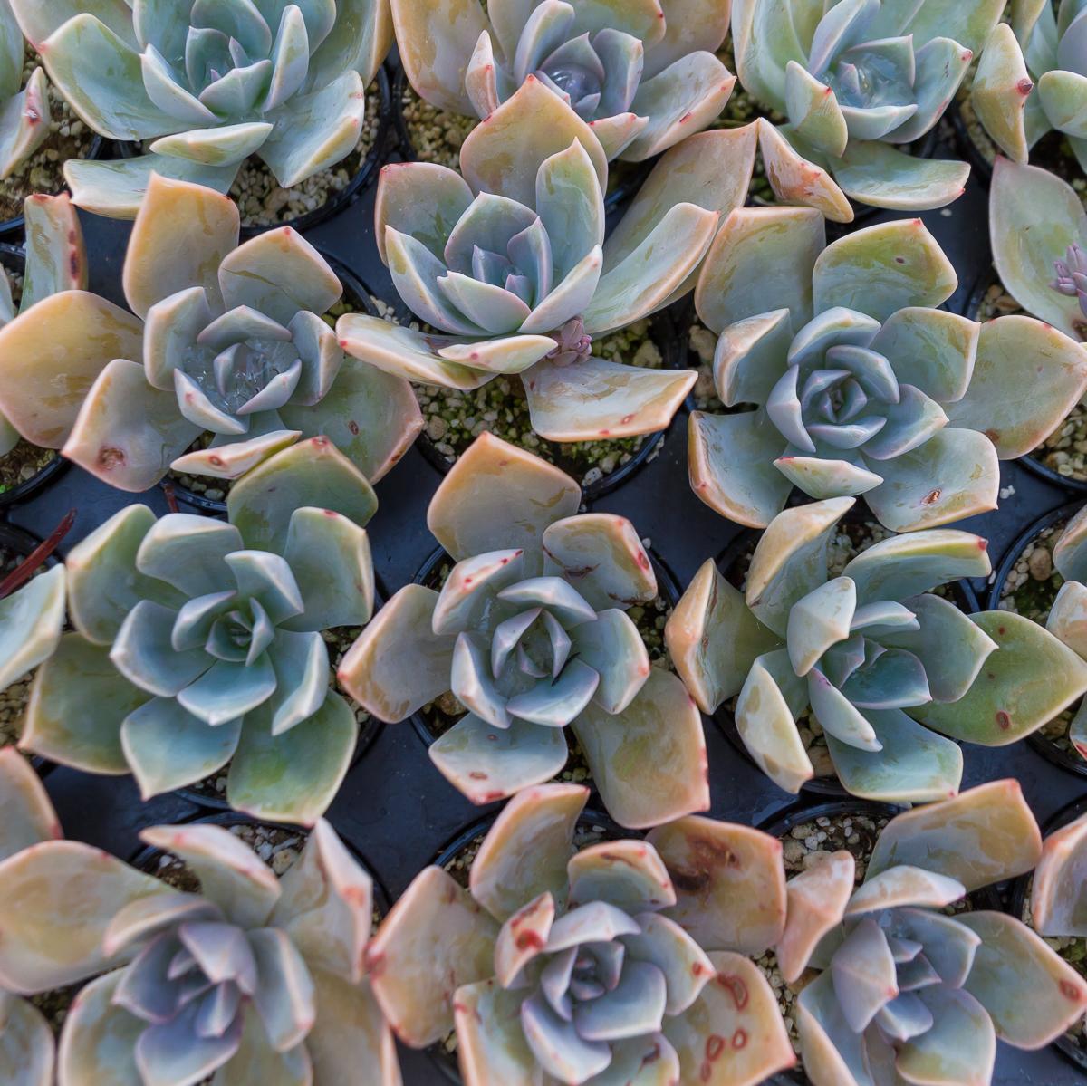Succulent Store_WEB-401