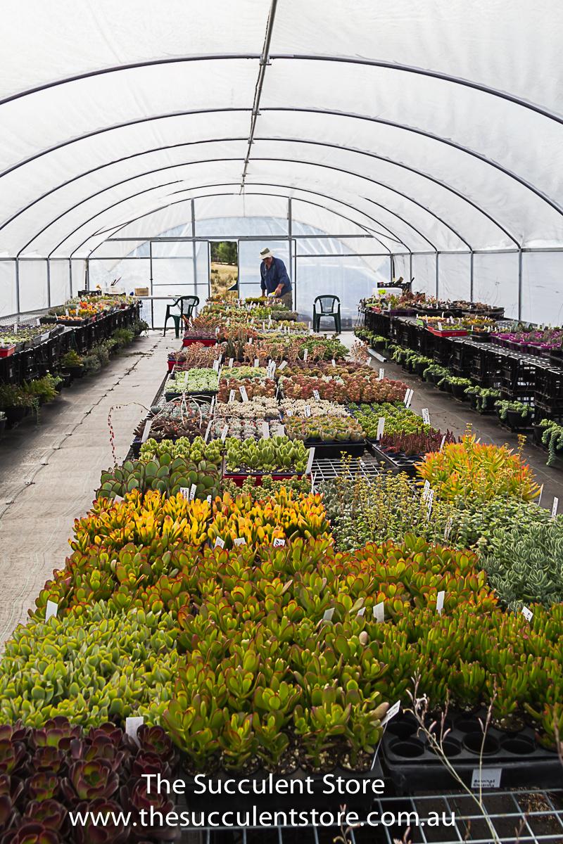 Succulent Store Jan2017-1120