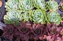 Succulent Store_WEB-302