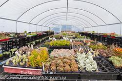 Succulent Store Jan2017-1101