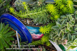 The Succulent Store-195