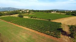 Vina Romeo Vinograd / Wineyard