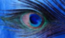 bdefotograaf-digifoto-pro-detail-pauwenv