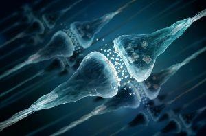 Herinneringen aflezen uit de activiteit van genen in het brein