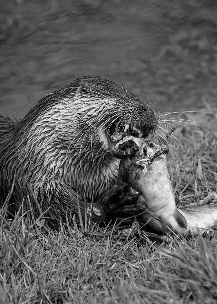 2010.03.28_BWC_British Wildlife Centre_1
