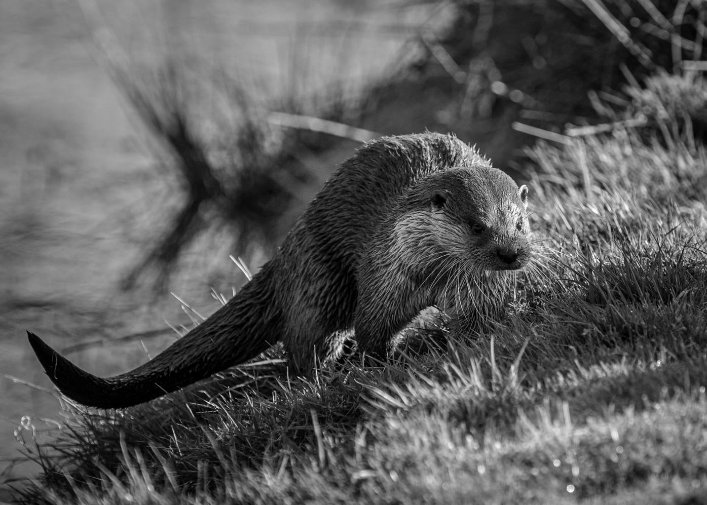 2009.04.04_BWC_British Wildlife Centre_1