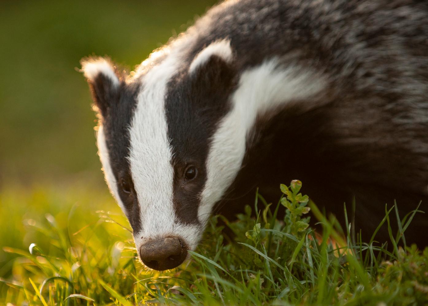 2010.10.08_BWC_British Wildlife Centre_1