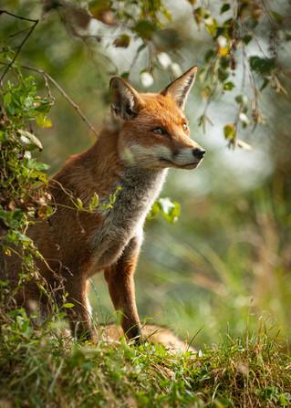 2007.09.15_BWC_British Wildlife Centre_F