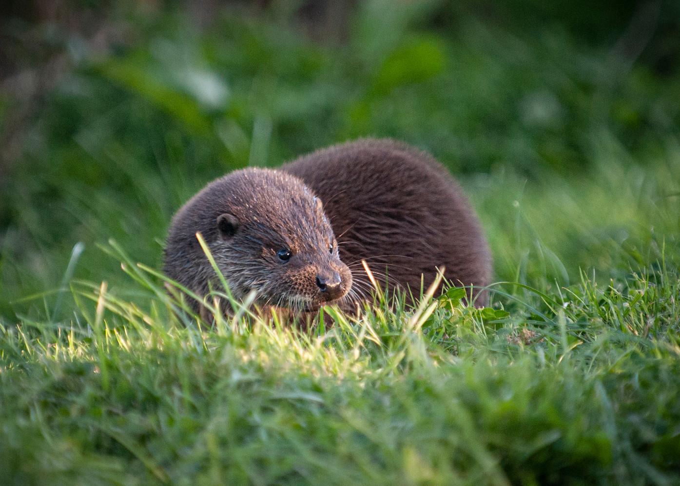 2009.08.09_BWC_British Wildlife Centre_1