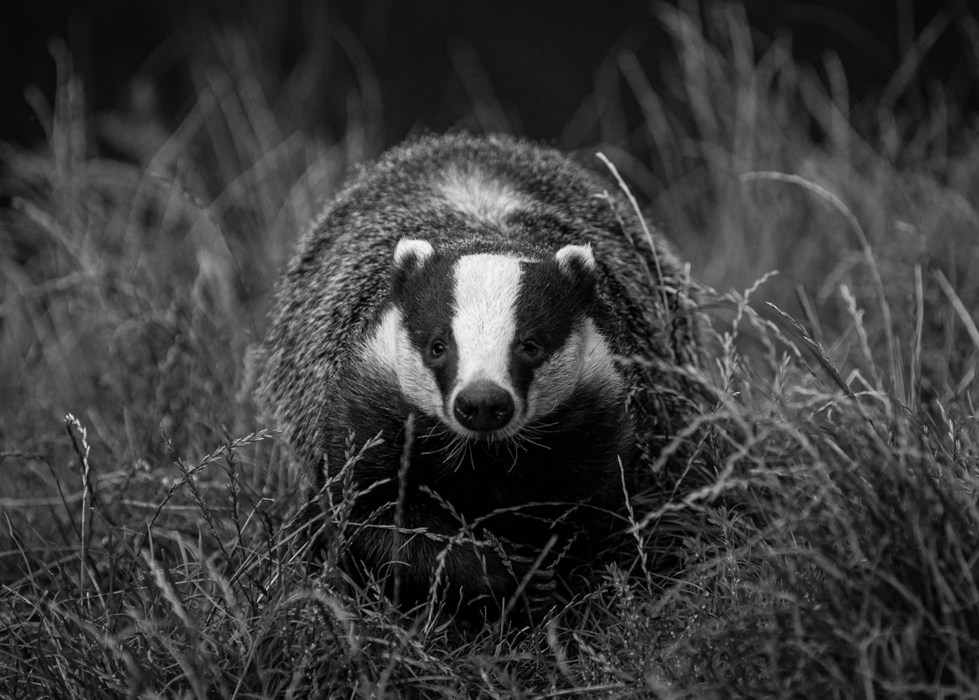 2008.08.23_BWC_British Wildlife Centre_2