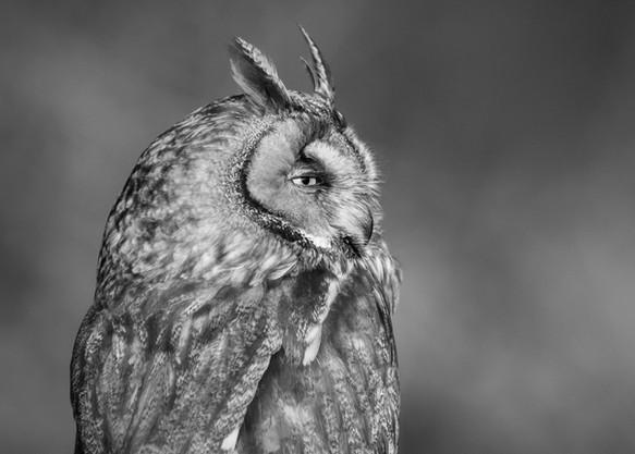 2012.03.23_BWC_British Wildlife Centre_2