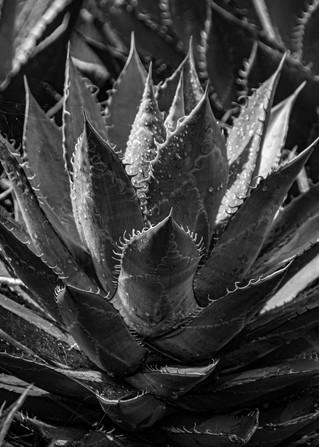 2009.02.10_Baja_Mark Carwardine_2DR4897-