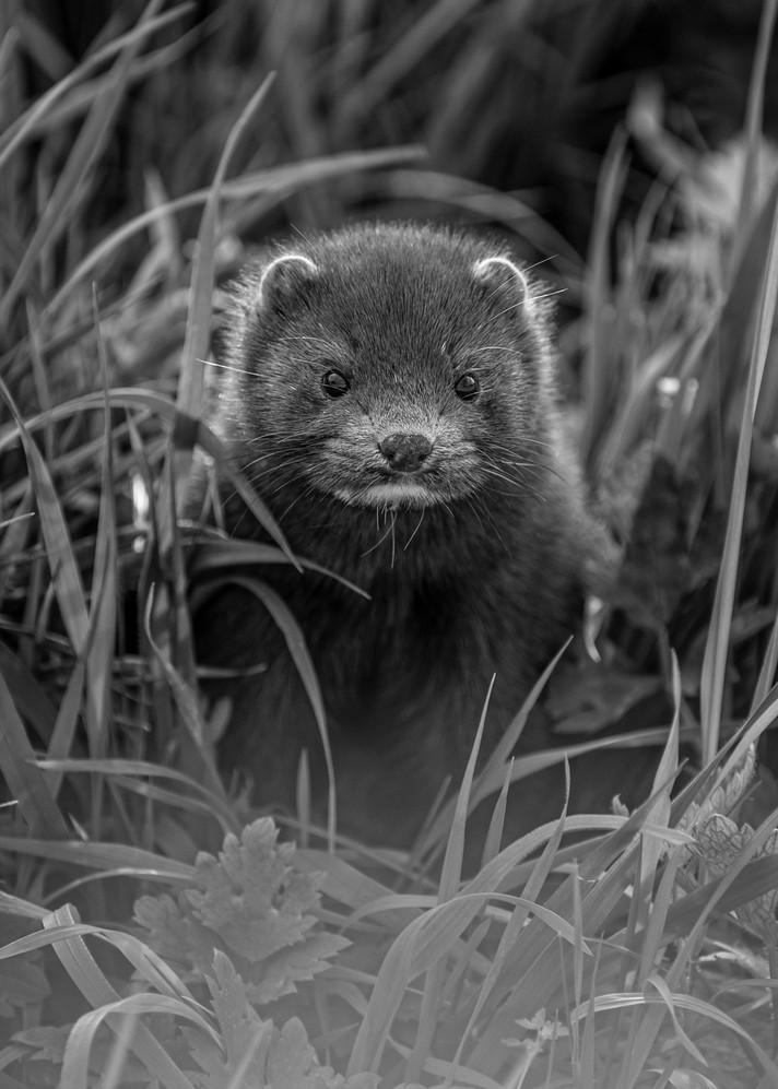 2009.04.04_BWC_British Wildlife Centre_A