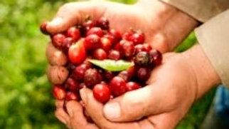 Ro-boost-a! Blend (Higher Caffeine), Robusta Cherry + Arabica Blend