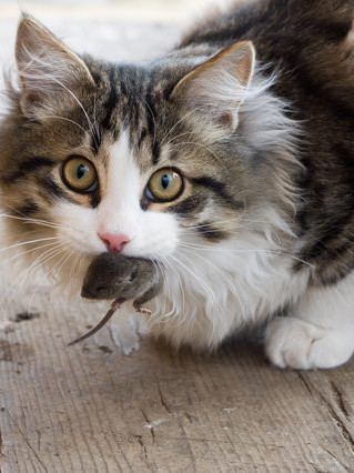 Cats Investigating Report That Mouse Was Killed