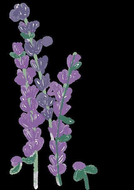 cj_lavender.png