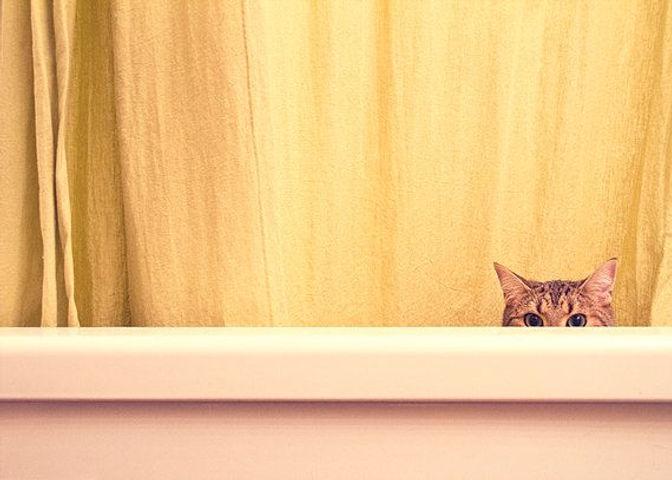 1-peeking-cat.jpg